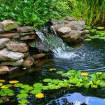jak se starat o zahradní jezírko