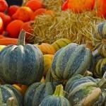 pumpkin-567689_640