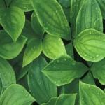 Inteligentní rostliny