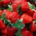 Zahrada v červnu - jahody