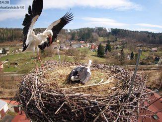Čapí hnízdo Bohuslavice