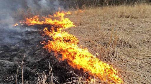 vypalování trávy