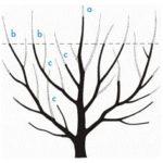 (Ne)řez ovocných stromů